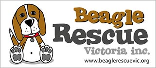 Beagle Rescue Victoria Inc